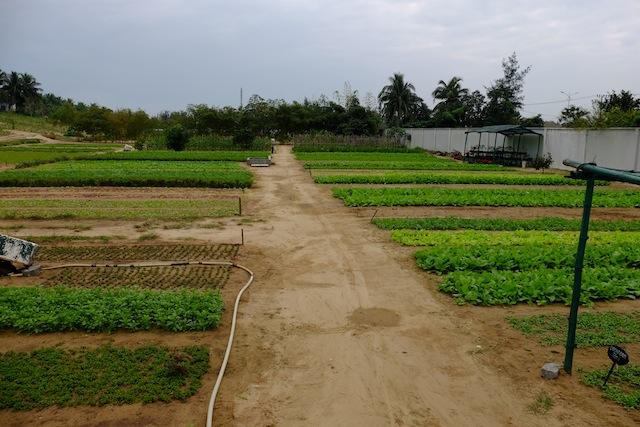 Nam Hai own gardenerie