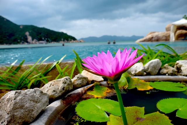 An LAm Blume
