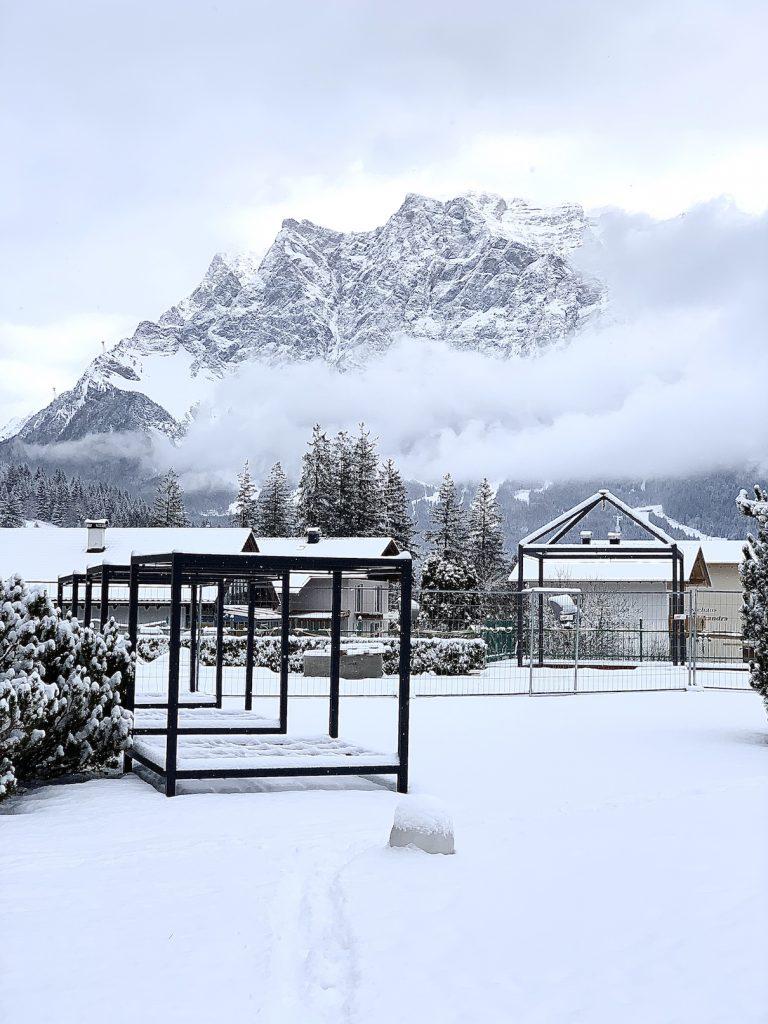 Sicht auf die Zugspitze Alpenrose Lermoos